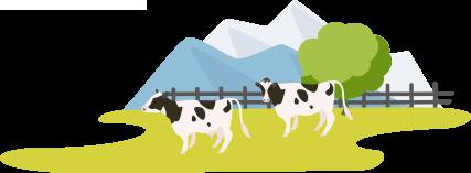 牛の放牧画像