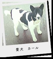愛犬カール