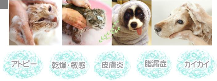 アトピー/乾燥・敏感/皮膚炎/脂漏症/カイカイ
