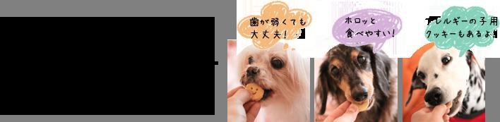 シニアに嬉しいソフトクッキー新発売