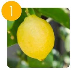 福岡県産レモンを使用
