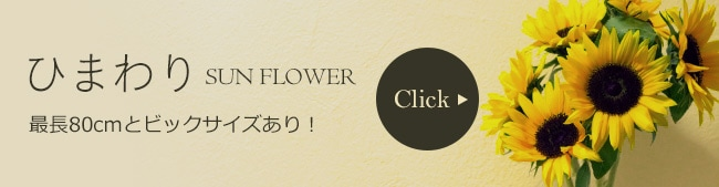 ひまわり sunflower