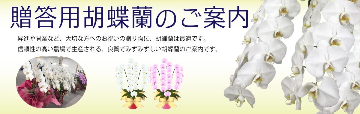 胡蝶蘭のご案内