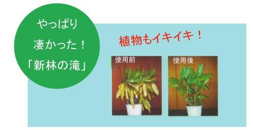新林の滝 植物もイキイキ!