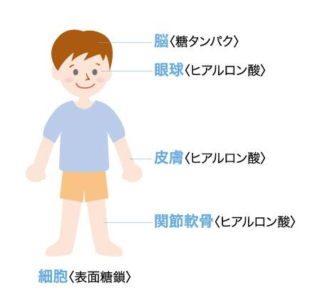 幸&楽イラスト1