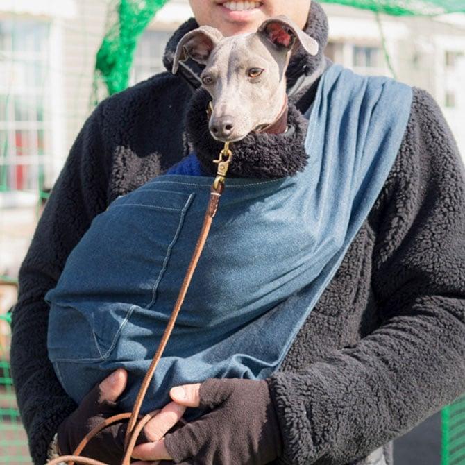 Resultado de imagen para 犬 Italian Greyhound  パーティー
