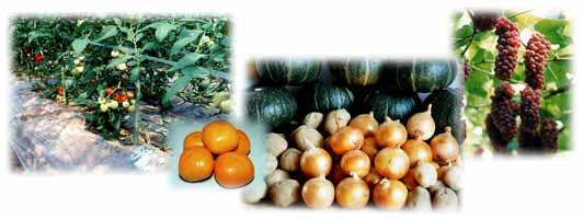 野菜Photo