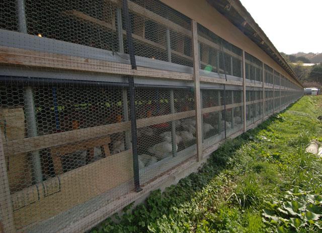 写真:鶏舎の外観