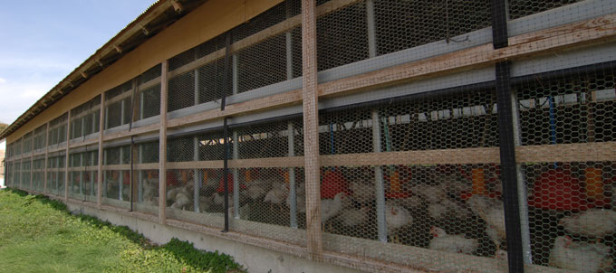 写真:米沢郷牧場の鶏舎