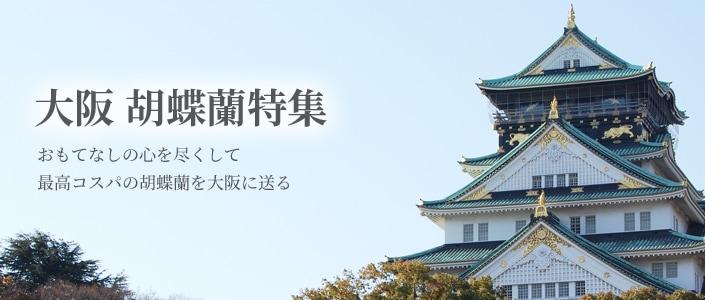 胡蝶蘭全国配送 大阪