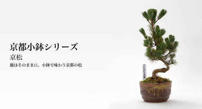 京都小鉢シリーズ 京松