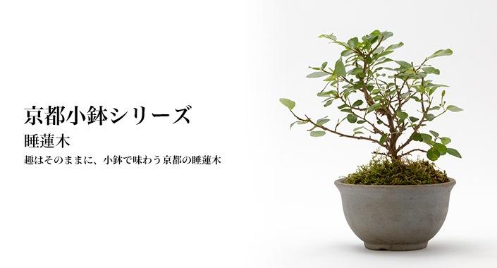 京都小鉢シリーズ 京睡蓮木