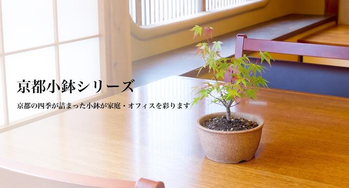 京都小鉢シリーズ