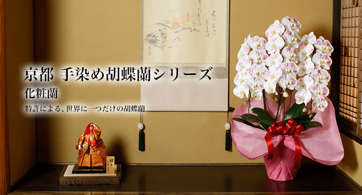 京都 手染め胡蝶蘭シリーズ