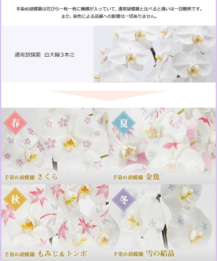 手染め胡蝶蘭は花びら一枚一枚に模様が入っていて、通常胡蝶蘭と比べると違いは一目瞭然です。また、染色による品質への影響は一切ありません。