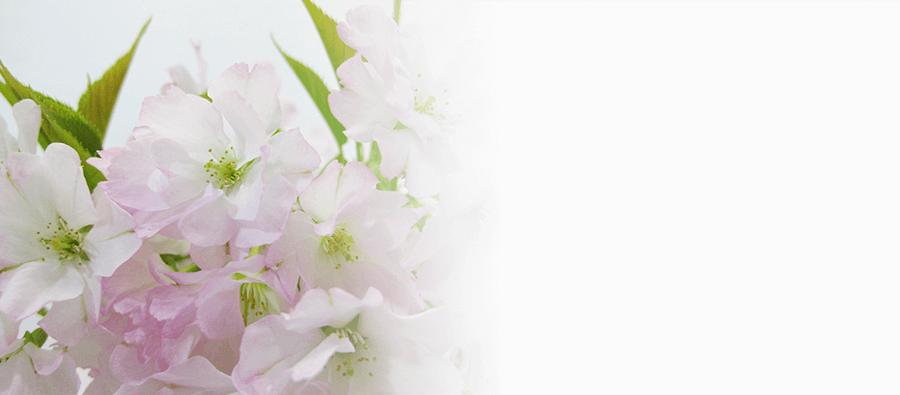 御車返し桜
