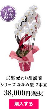 京都 変わり胡蝶蘭シリーズ ななめ型 2本立