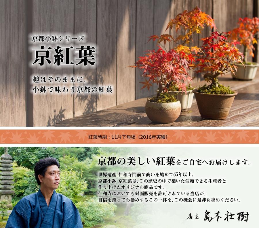 京都小鉢シリーズ 京紅葉 趣はそのままに、小鉢で味わう京都の紅葉