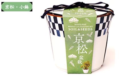 京都小鉢(ミニ盆栽) 種栽培セット 京松