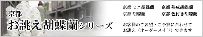 京都お誂え胡蝶蘭シリーズ
