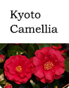 kyoto camellia