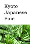 Kyoto Japanese Pine
