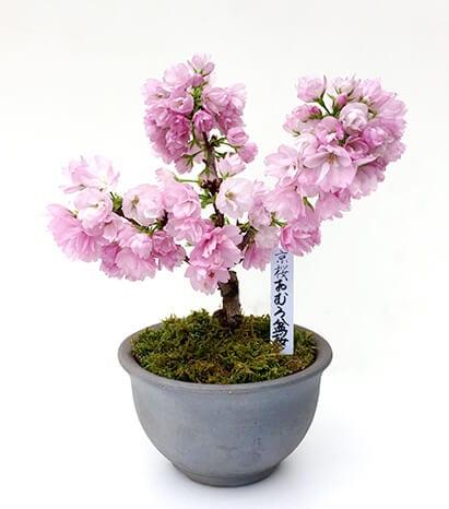 Shingen-Ceramics