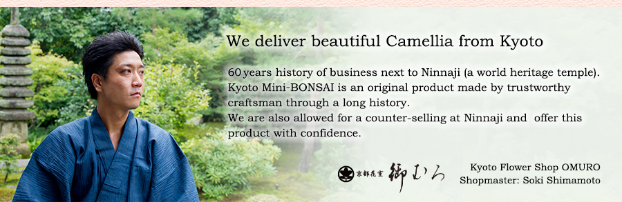 We deliver beautiful Camellia from Kyoto