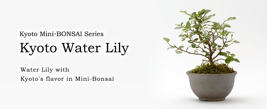 Kyoto Mini-BONSAI Series Kyoto Water Lily
