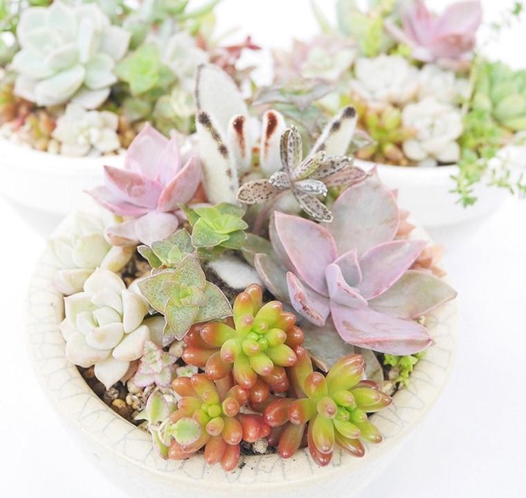 多肉植物の可愛い寄り植え