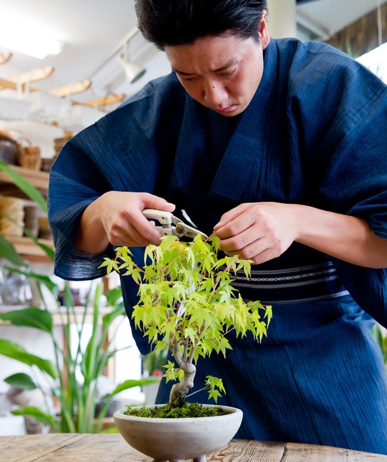 お手入れ簡単で手軽に楽しめる京都の紅葉