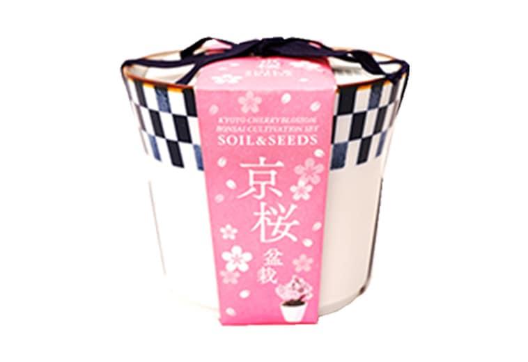 京都小鉢(ミニ盆栽)種栽培セット 京桜
