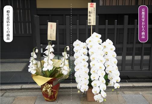 京都花室おむろ  長持ちの比較