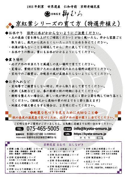 京紅葉(特選升植え)
