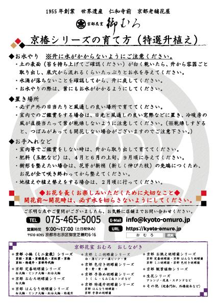 京椿(特選升植え)