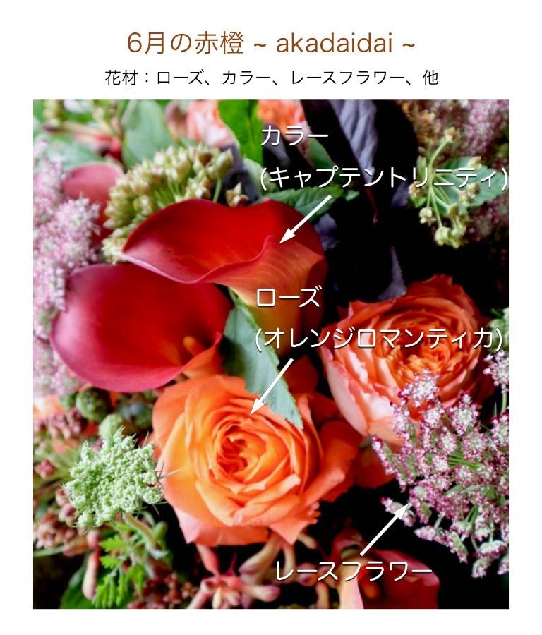 6月の赤橙イメージ画像