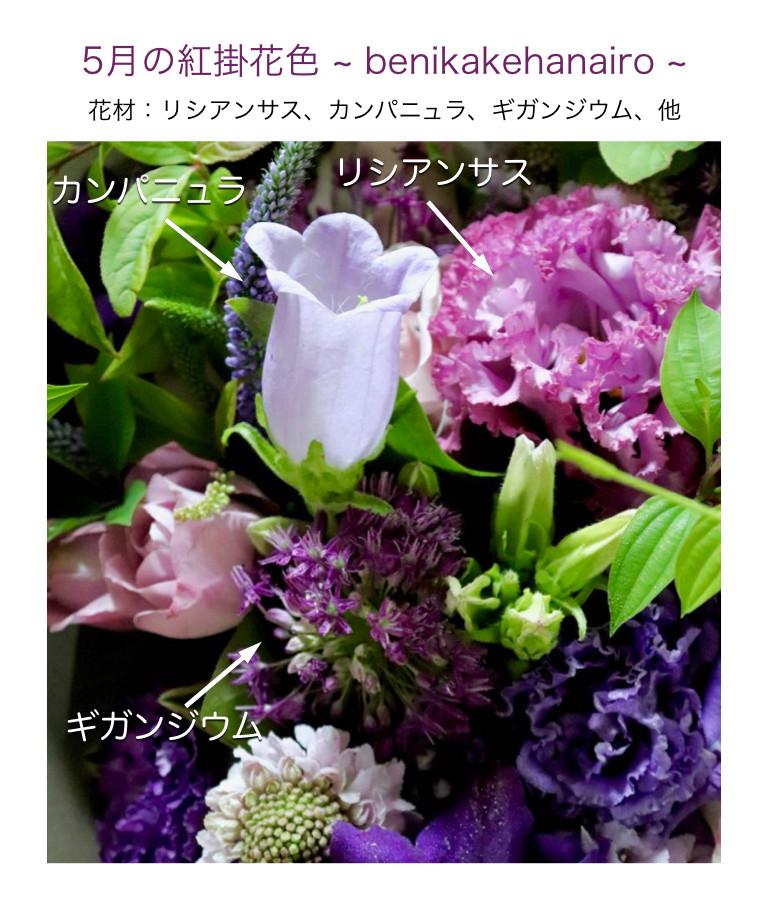 5月の紅掛花色イメージ画像