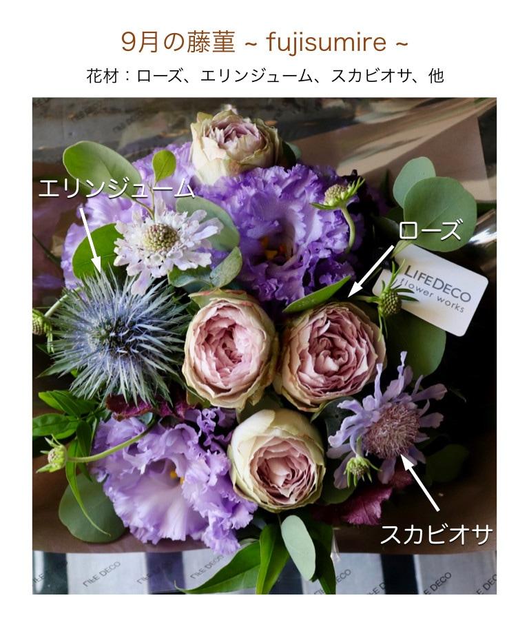 9月の藤菫イメージ画像