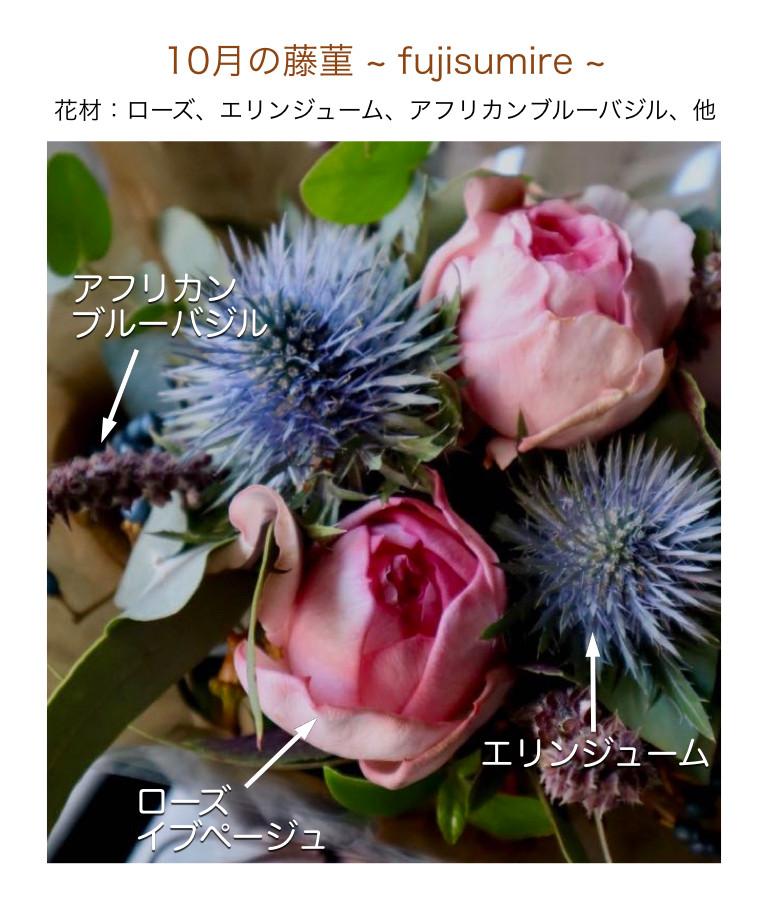 10月の藤菫イメージ画像