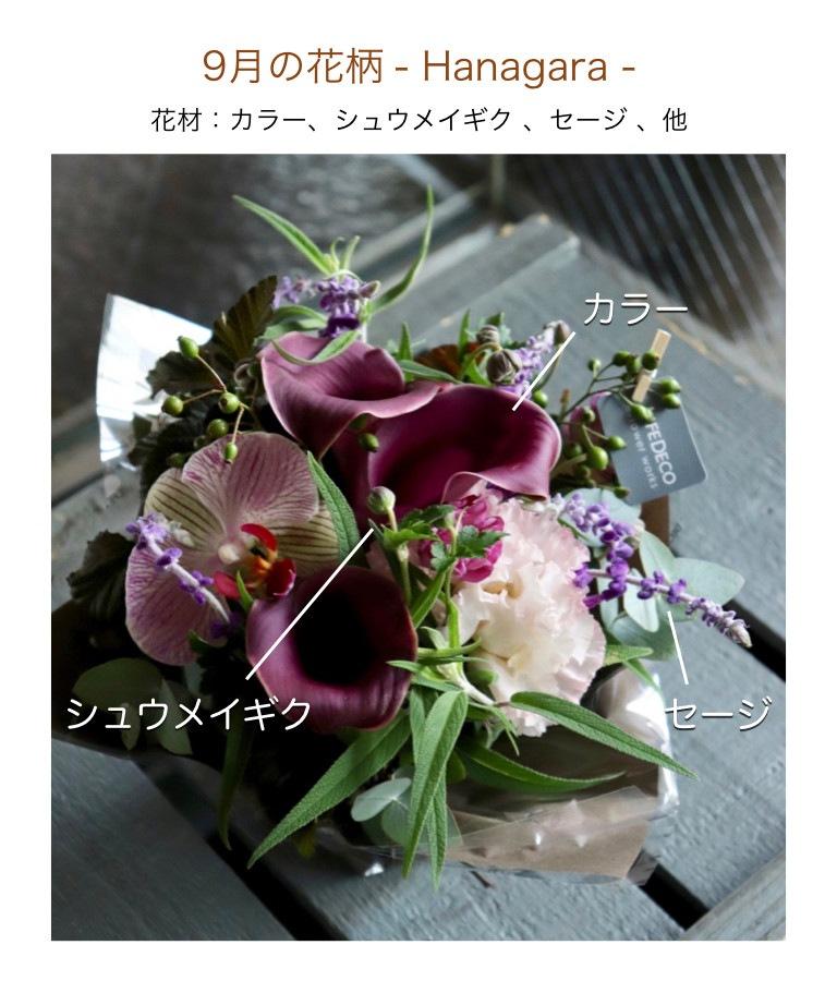 9月の花柄イメージ画像