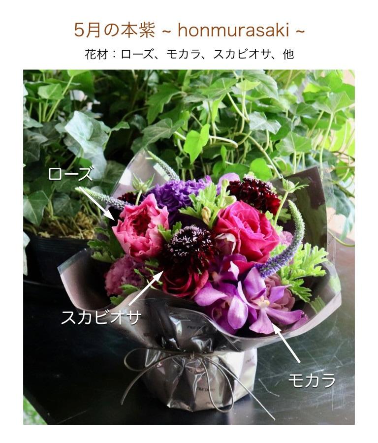 5月の本紫イメージ画像