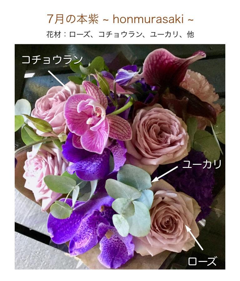 7月の本紫イメージ画像