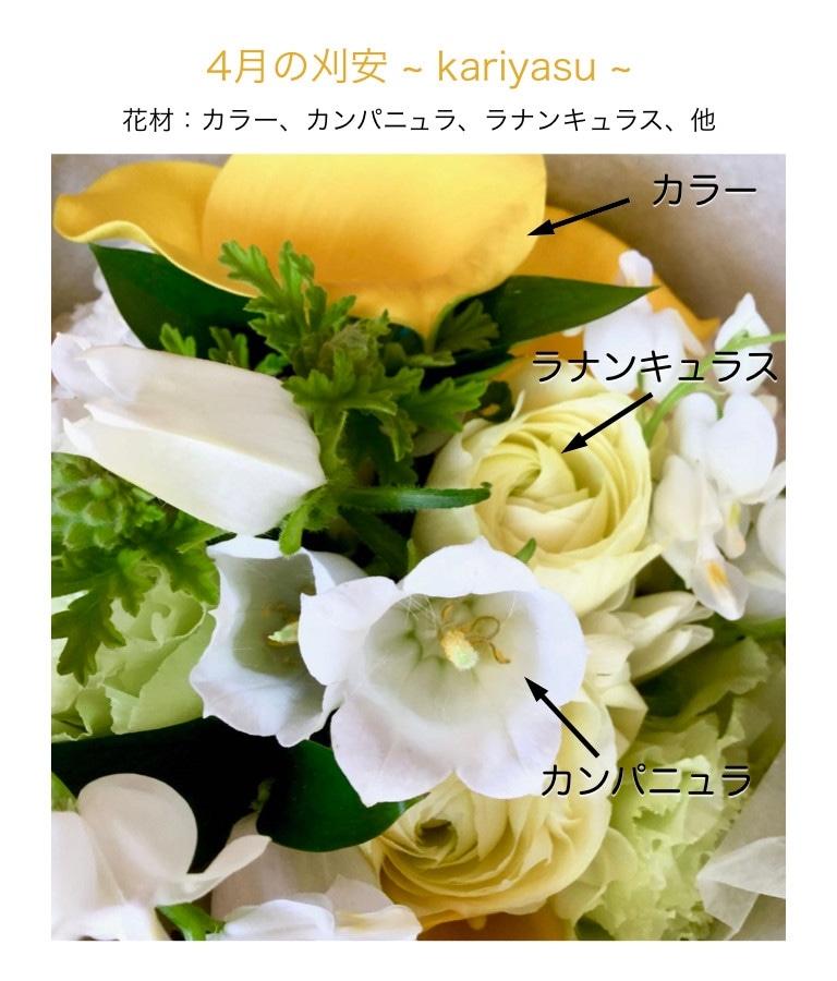 刈安イメージ画像4月