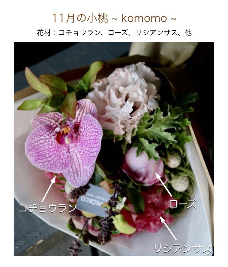 11月の小桃イメージ画像