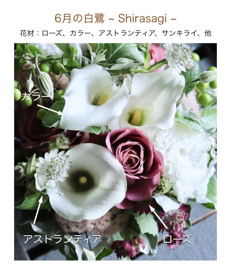 6月の白鷺イメージ画像