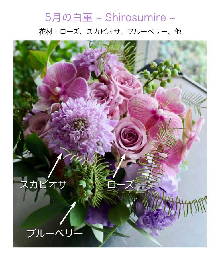 5月の白菫のイメージ画像