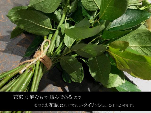 麻紐イメージ画像