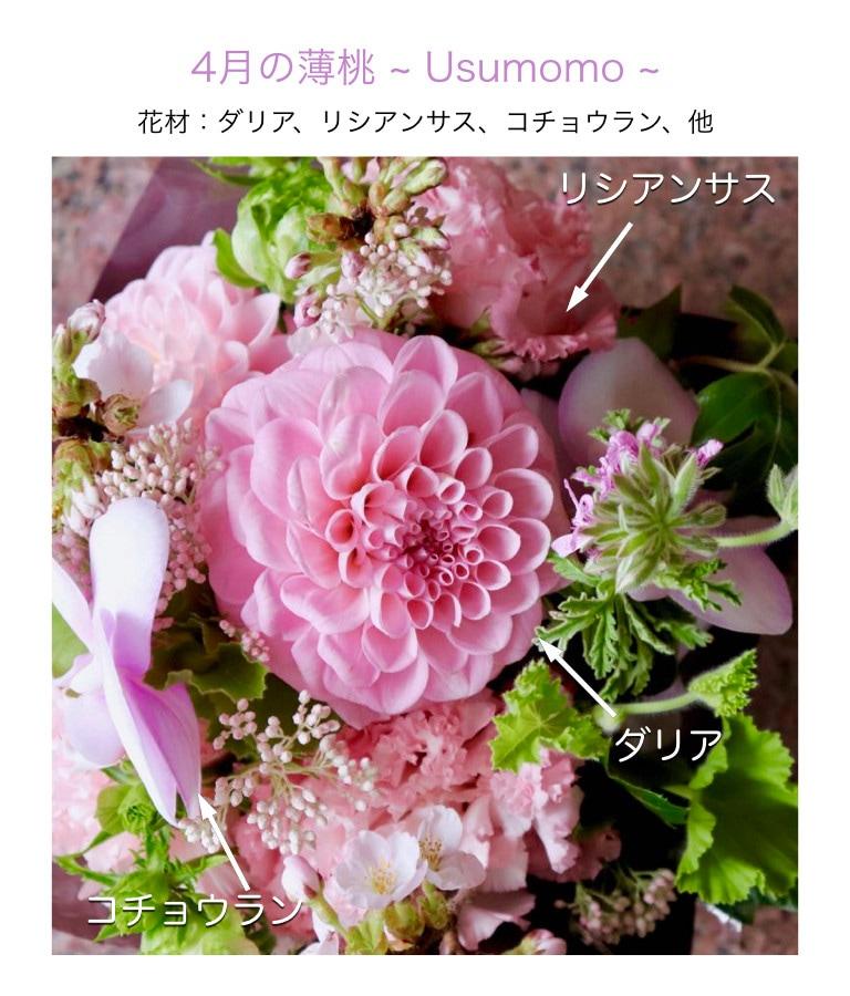4月の薄桃イメージ画像