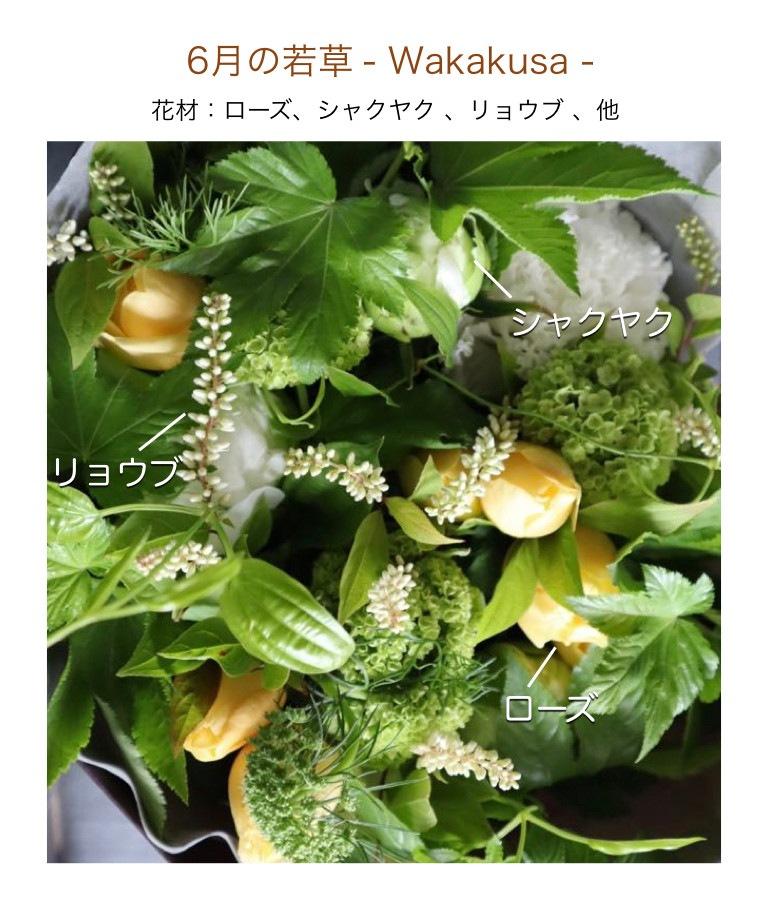6月の若草メージ画像