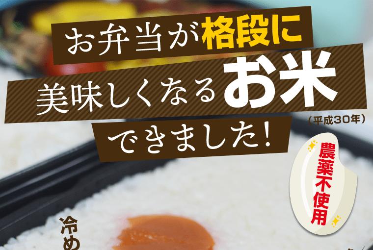 お弁当が格段に美味しくなるお米できました